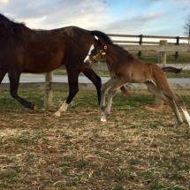 Filly out of Cat Mistress by Jump Start. Foaled 2/27/17 at Northview PA. Bred and owned by Richard Malouf. PC: Tim Fazio