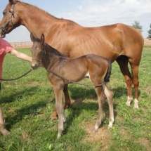 6-10-17 filly by PA stallion Misbah o/o Sandtique, by Sandpit (Brz) at 2 days at Judy Barrett's Godstone Farm in Littletown, PA.