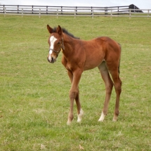 Filly out of Rhythm and ques by Golden Lad born 3/17/17 at NVPA Tim Fazio