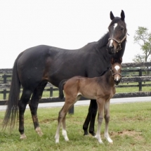 Date foaled 5/4/17 at Northview PA Dam Royal Marquesa Sire Jump Start Breeder and owner - Shane and Kit Alley Photo Credit - Northview