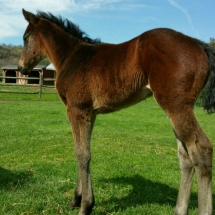12 day old Redeemed filly out of Studious