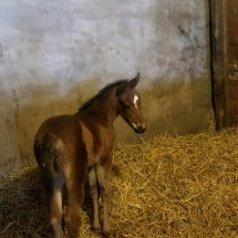 Tizway filly ww Five Carot Day Feb 28 Cabin Creek Robby Rankin