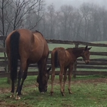 Born March 25 at WynOaks Farm the filly is by Weigelia oo Red Bank Robin