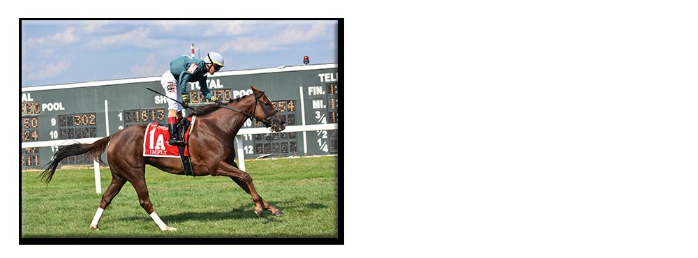 2011 Horses - PHBA